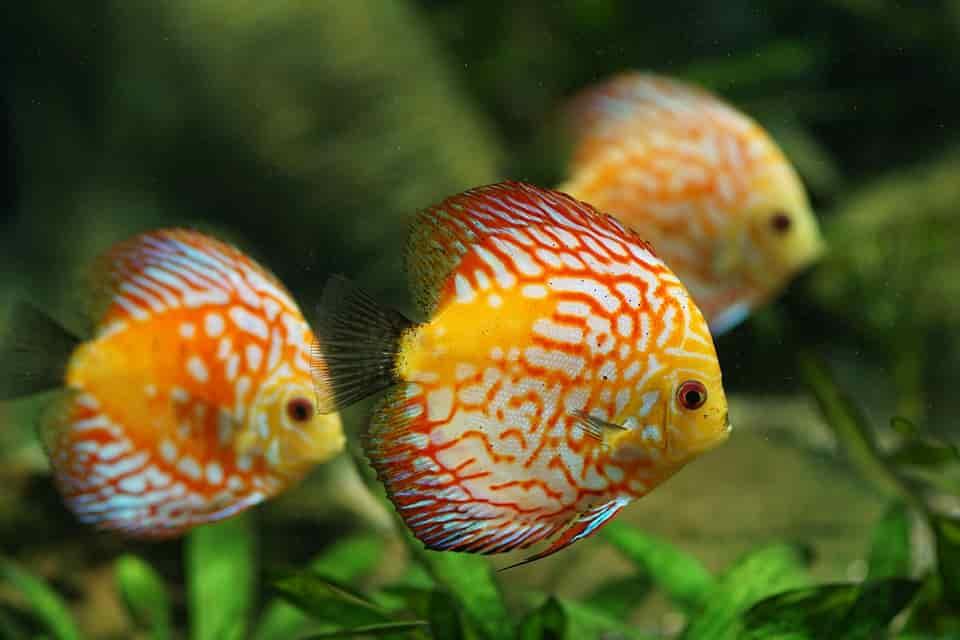 aquarisztika