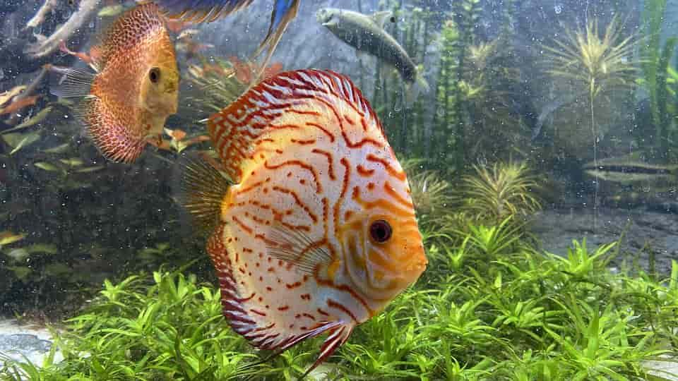 akvárium készítés