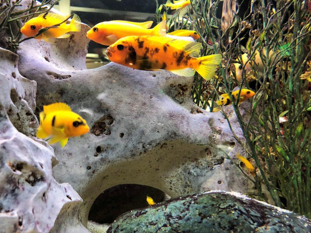 3D akvárium háttér sziklák
