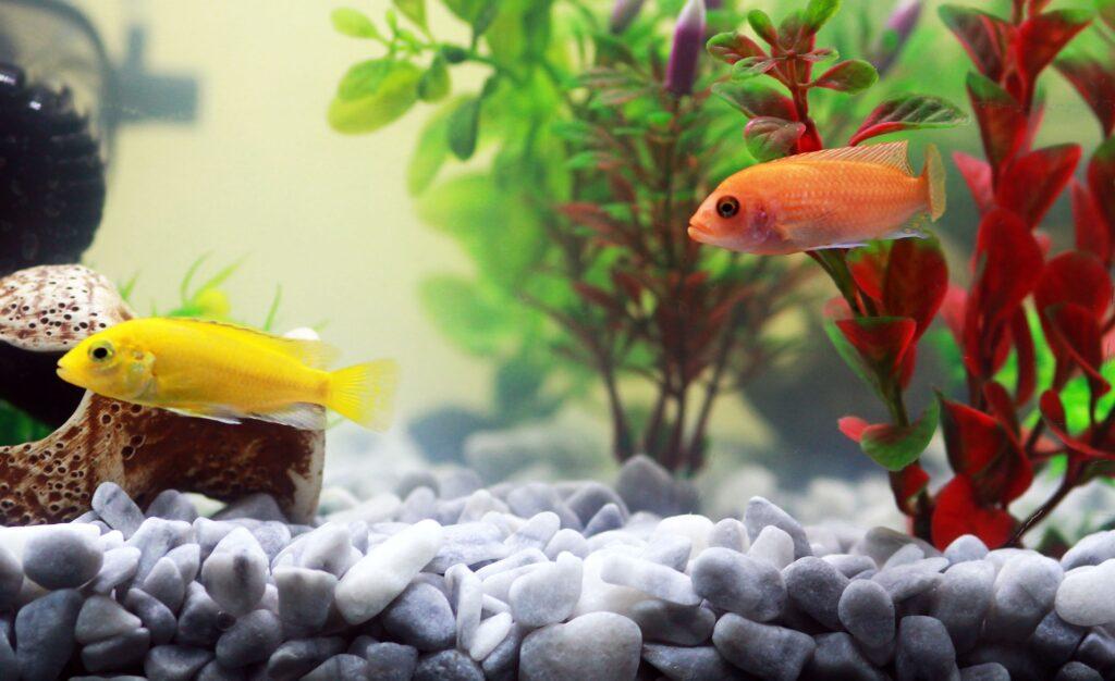 Akvárium aljzat, kavics