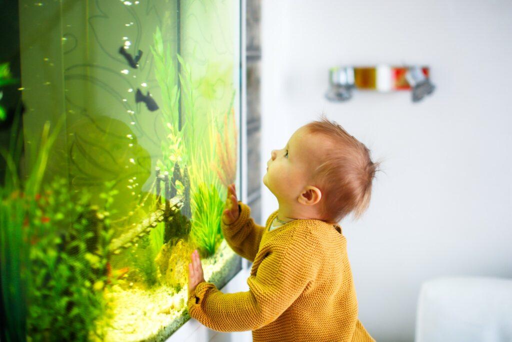 Csodaszép akvárium háttér készítés házilag
