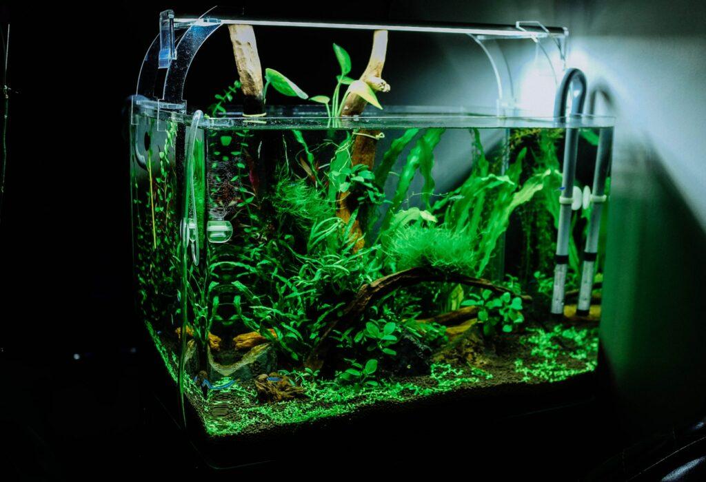kezdő akvárium berendezései