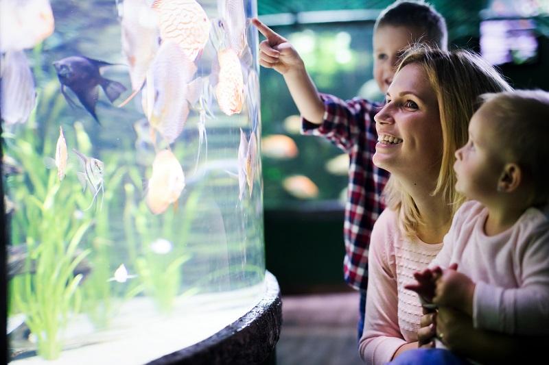 akvárium algásodás okai túl sok fény