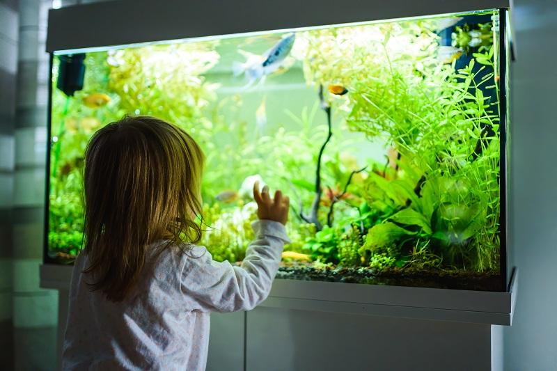 akvárium tisztítás lépésről lépésre